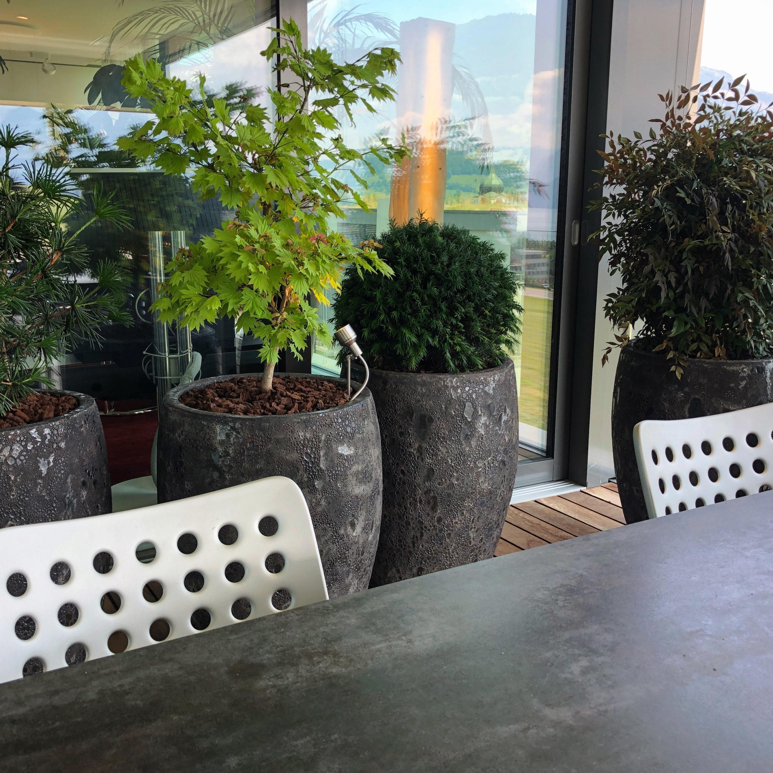 Terrasse MFH,Pflanzenschönheiten in Keramikgefässen