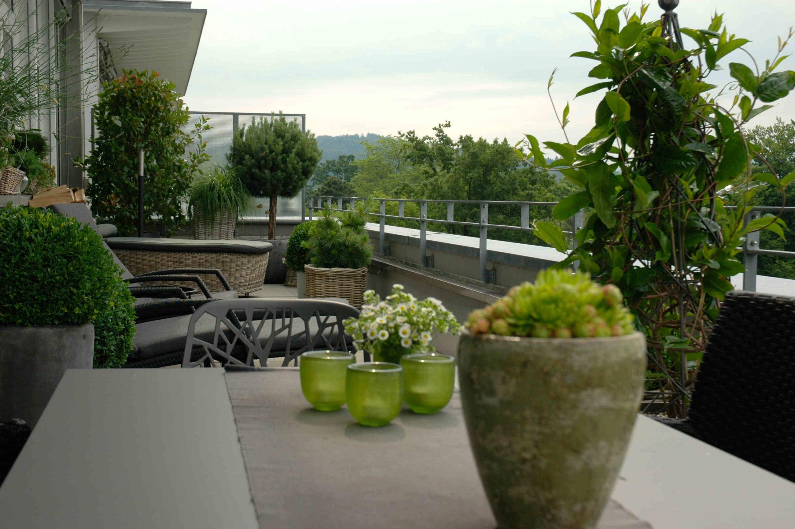 Terrasse, MFH, immergrün und pflegeleicht